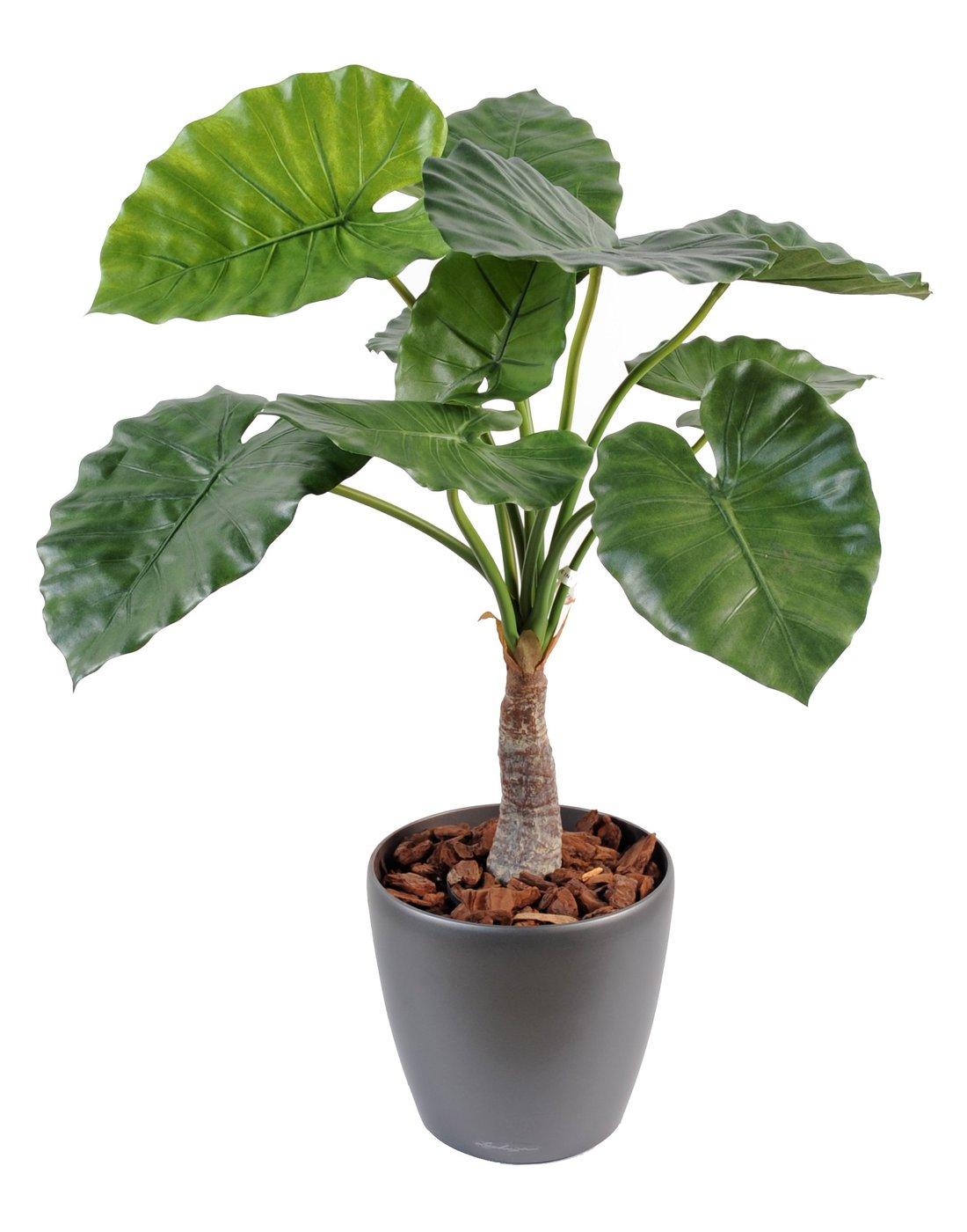 jardim vertical o que e : jardim vertical o que e ? Doitri.com